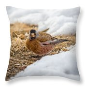 Gray Capped Rosy Finch In The Snow Throw Pillow