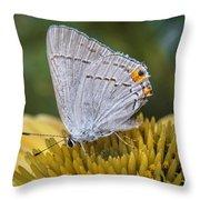 Gray Hairstreak Butterfly Throw Pillow