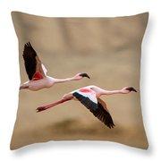Greater Flamingos Phoenicopterus Roseus Throw Pillow
