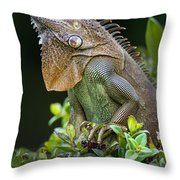 Green Iguana Iguana Iguana, Sarapiqui Throw Pillow