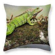 Green Iguana Iguana Iguana, Tarcoles Throw Pillow