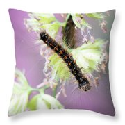 Gypsy Moth Caterpillar Throw Pillow