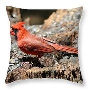 Hungry Cardinal Throw Pillow
