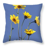 Happy Daisies II Throw Pillow