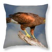 Harris's Hawk On Watch Throw Pillow