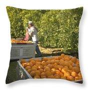 Harvesting Navel Oranges Throw Pillow