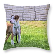 Hdr America Breed Throw Pillow