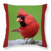 Hello Cardinal Throw Pillow