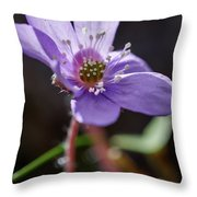 Hepatica 4 Throw Pillow