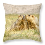 Himalayan Marmots Pair Kissing In Open Grassland Ladakh India Throw Pillow