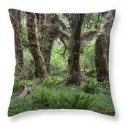 Hoh Rain Forest 3371 Throw Pillow