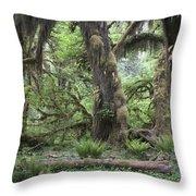 Hoh Rain Forest 3381 Throw Pillow