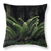 Hoh Rain Forest 3392 Throw Pillow