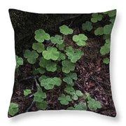 Hoh Rain Forest 3393 Throw Pillow