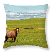 Horse Grazing Throw Pillow