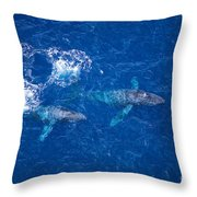 Humpback Whales Aerial Throw Pillow