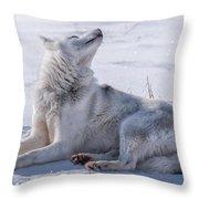 Huskies In Ilulissat, Greenland Throw Pillow