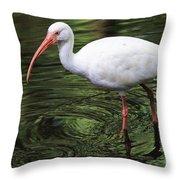 Ibis In The Marsh Throw Pillow