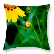 Illumination Throw Pillow by Frozen in Time Fine Art Photography