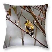 Img_0001 - American Goldfinch Throw Pillow