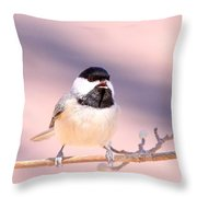 Img_0001 - Carolina Chickadee Throw Pillow