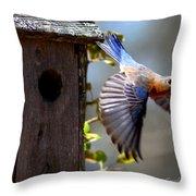 Img_1414-003 - Eastern Bluebird Throw Pillow