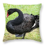In Search Of A Mate 2 Throw Pillow