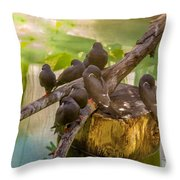 Inca Terns Throw Pillow by Richard J Thompson