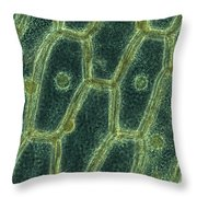 Iodine Stained Onion Cells Throw Pillow