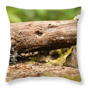 Is The Coast Clear? Throw Pillow