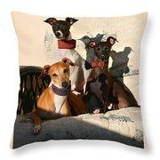 Italian Greyhounds Throw Pillow