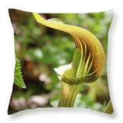 Jack-in-the-pulpit Throw Pillow