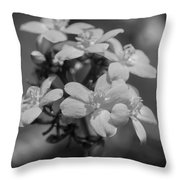 Jatropha Blossoms Painted Bw Throw Pillow