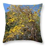 Jerusalem Thorn Tree Throw Pillow