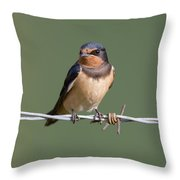 Juvenile Barn Swallow Throw Pillow