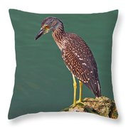 Juvenile Black Crowned Night Heron Throw Pillow