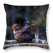 Juvenile Blackbird Throw Pillow