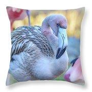 Juvenile Flamingo Throw Pillow