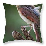 Juvenile Northern Cardinal Throw Pillow