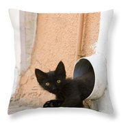 Kitten In A Pipe Throw Pillow