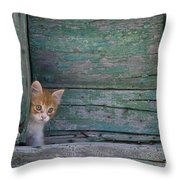 Kitten Peeking Out Throw Pillow