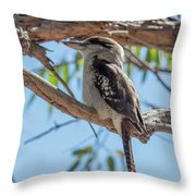 Kookaburra On A Branch Throw Pillow