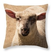 Lamb Looking Cute. Throw Pillow