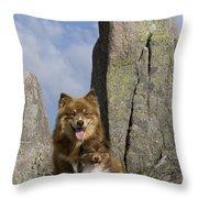 Lapinko�ra Dog And His Pup Throw Pillow