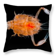 Larval Blind Lobster Throw Pillow