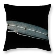 Larval Eel Throw Pillow