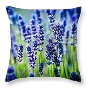 Lavander Flowers In Lavender Field Throw Pillow