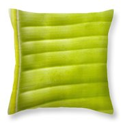 Leaf Close-up Throw Pillow