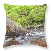 Leaning Tree Trunk By A Stream Throw Pillow