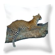 Leopard Panthera Pardus Sitting Throw Pillow